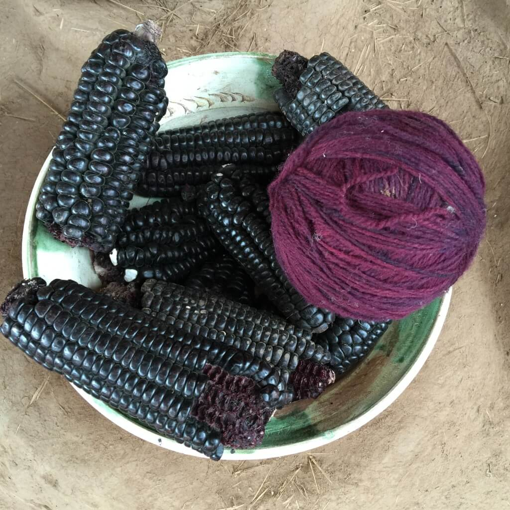 Purple corn is not only delicious, it's used to dye wool for weaving