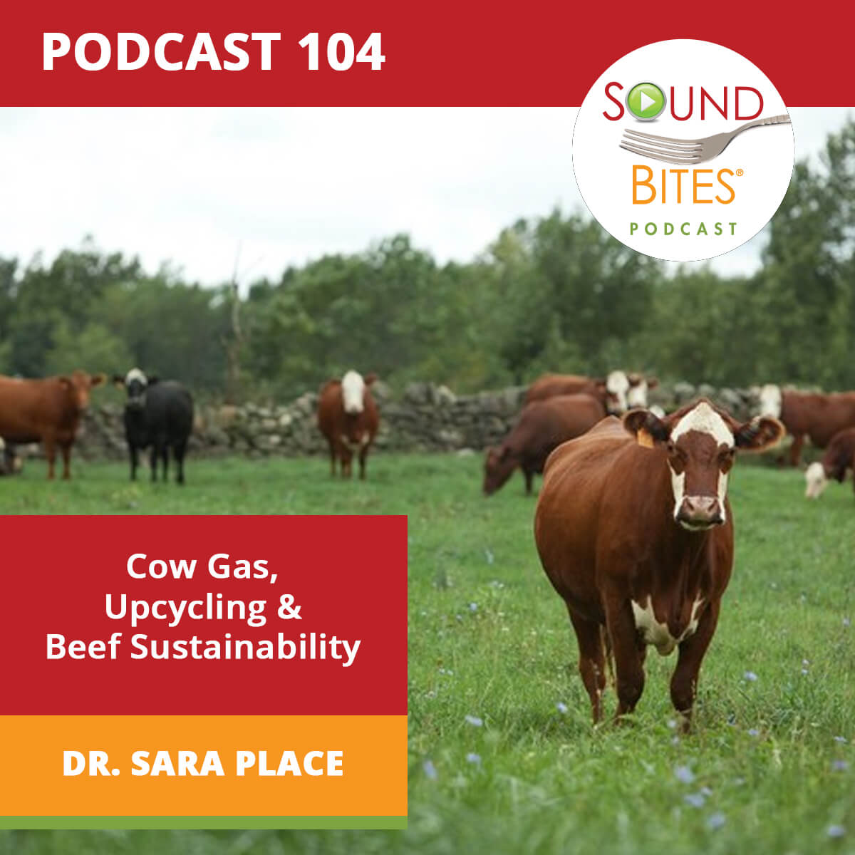 Sound Bites Podcast Episode 104: Cow Gas, Upcycling and Beef Sustainability – Dr. Sara Place