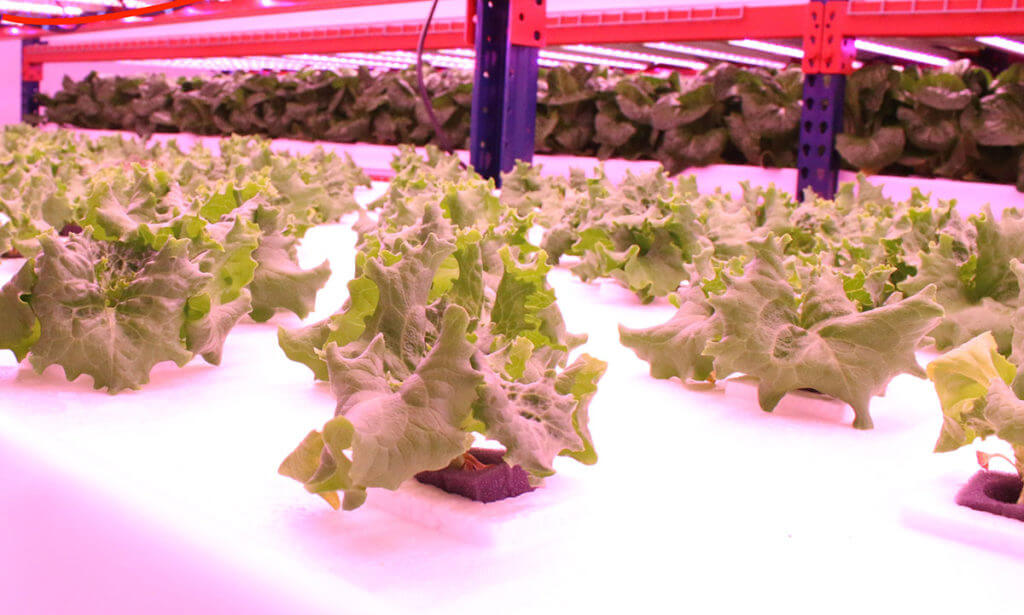 Indoor farming with Crop One